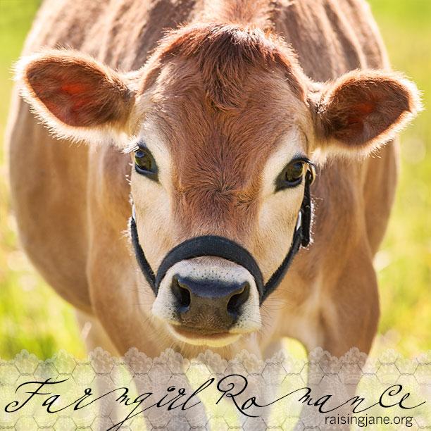 farm-romance_3560