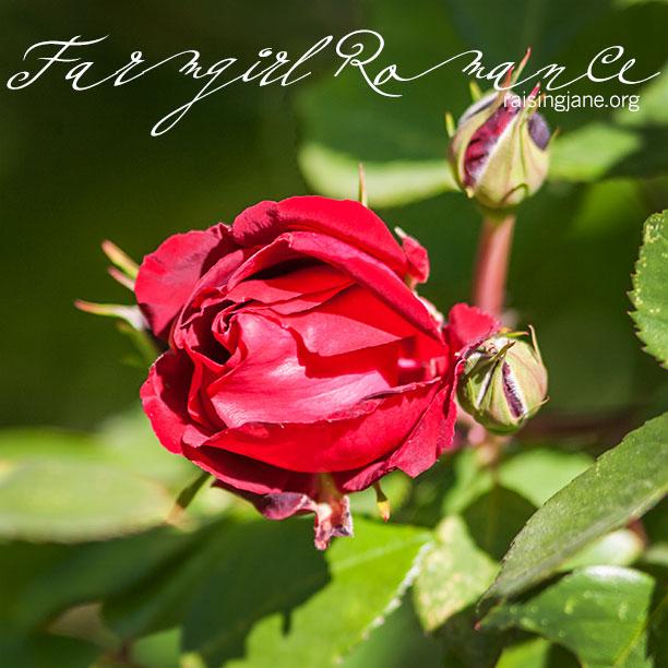farm-romance_3585