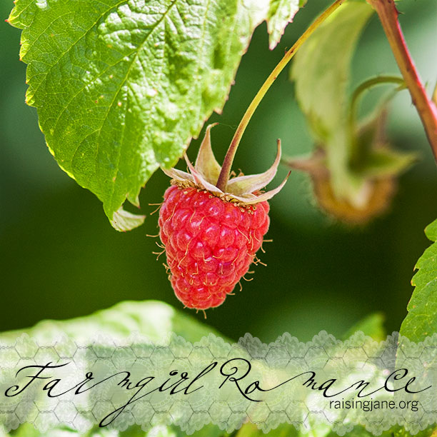 farm-romance_5672