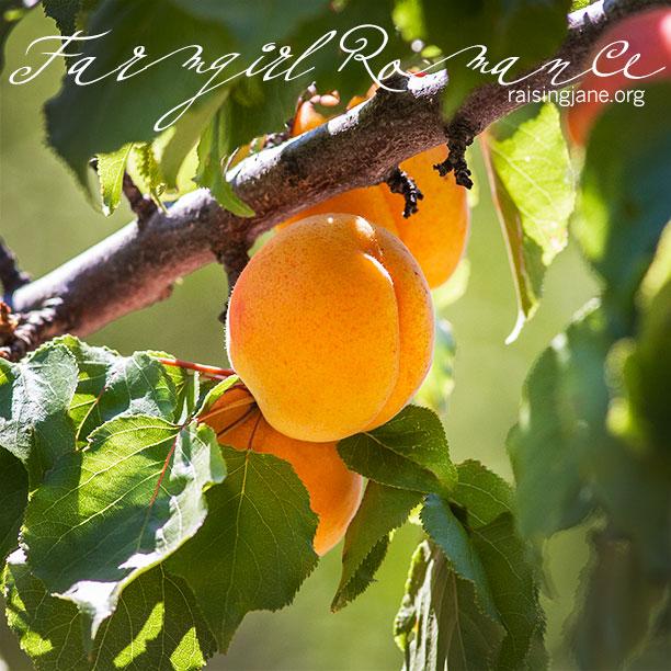 farm-romance_7218
