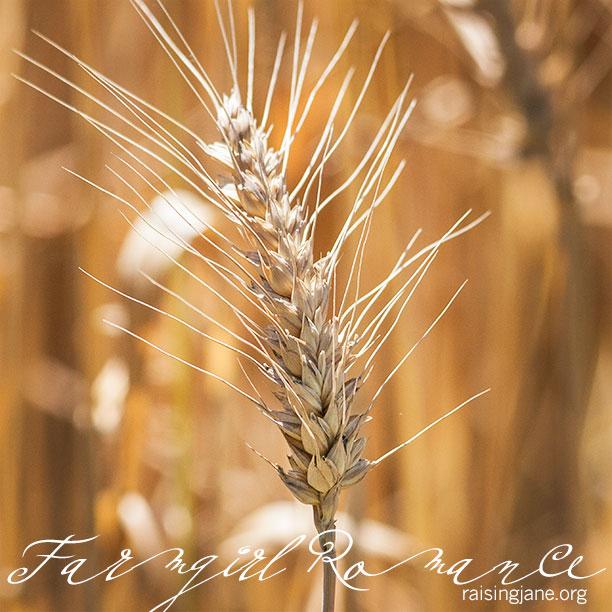 farm-romance_7243