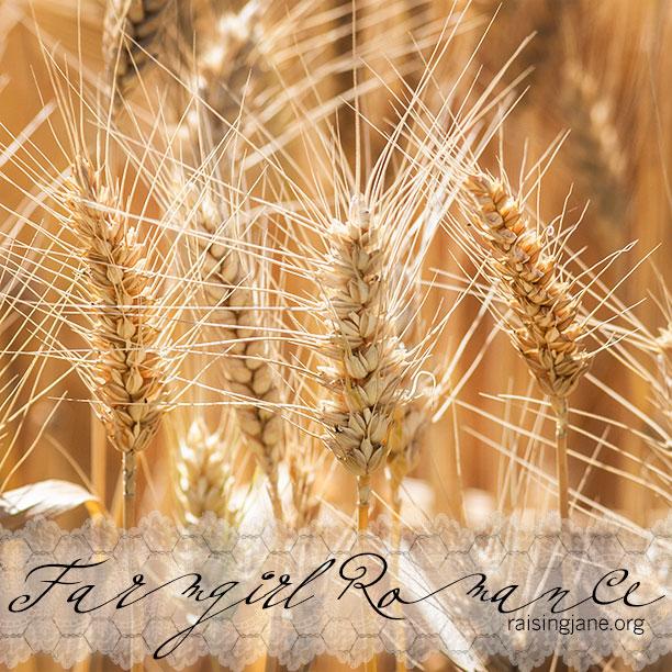 farm-romance_7244
