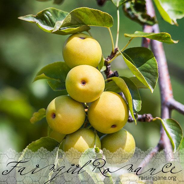 farm-romance_7673-2