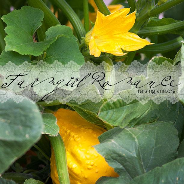 farm-romance_8310