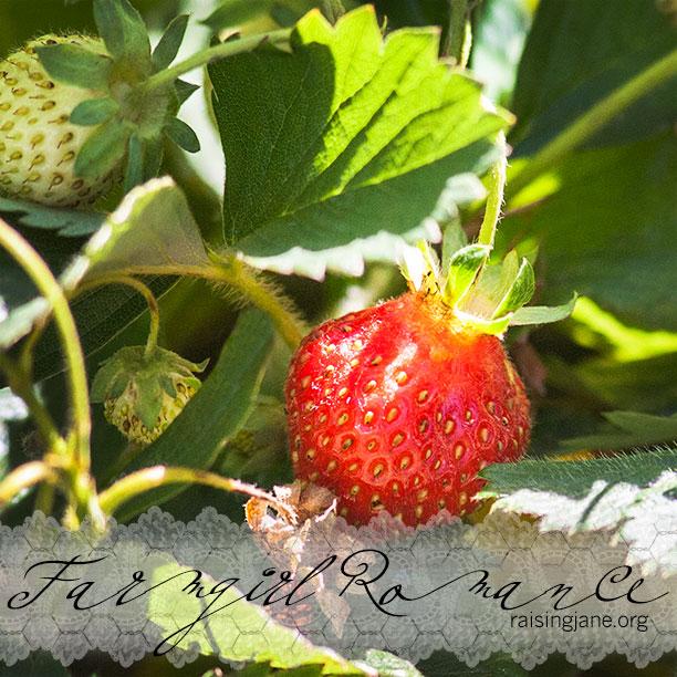 farm-romance_8903