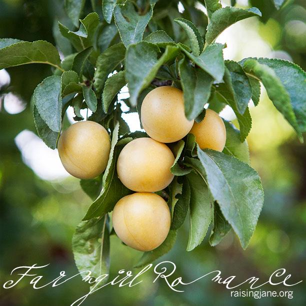 farm-romance_9042