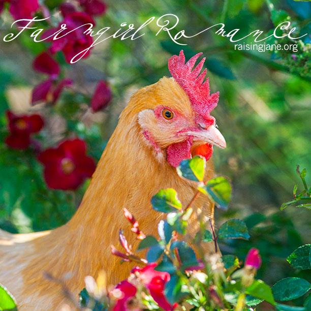 farm-romance_0062