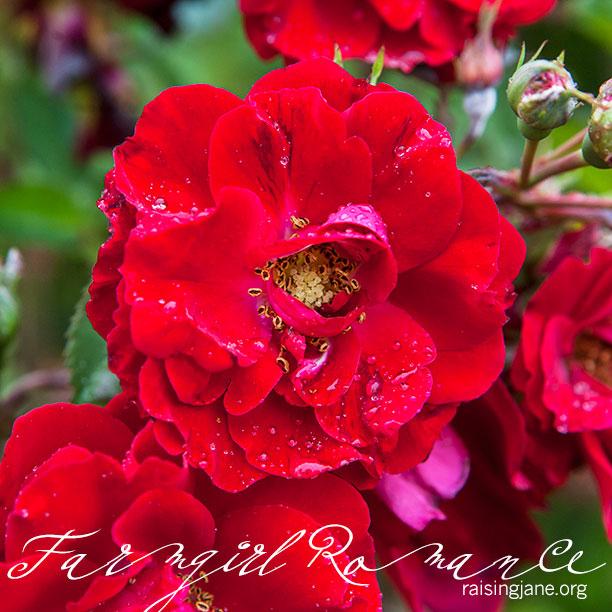 farm-romance_1742