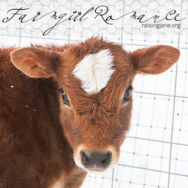 farm-romance_2566