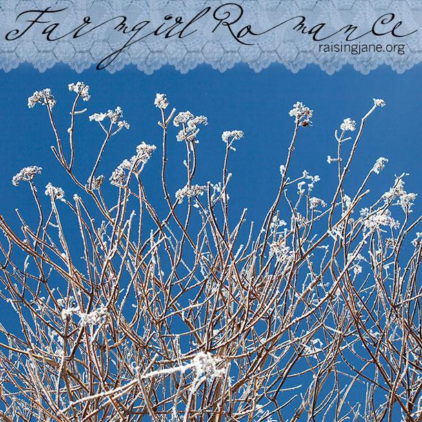 farm-romance-blue_7215
