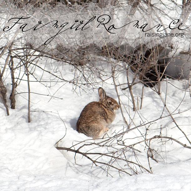 farm-romance-bunny_7204