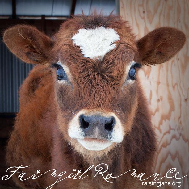 farm-romance_6816