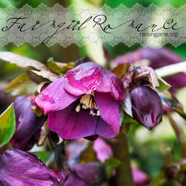 farm-romance_8786