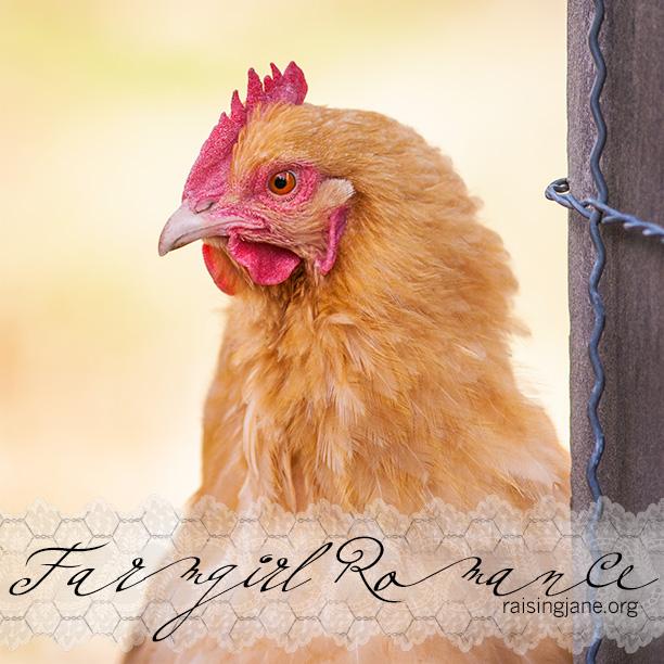 farm-romance_9120