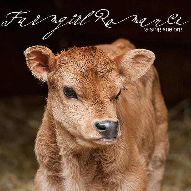 farm-romance_0200