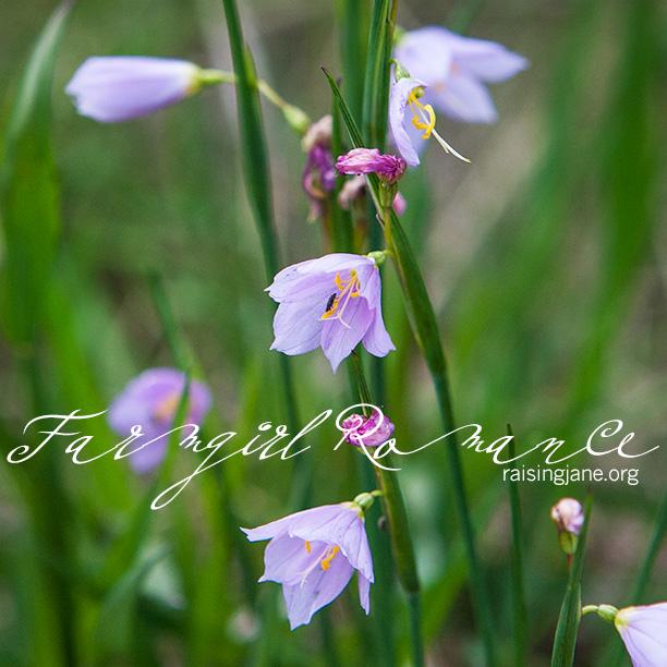 farm-romance_0383