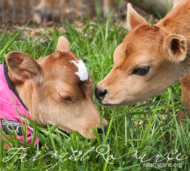 farm-romance_1241