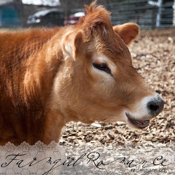 farm-romance_8893