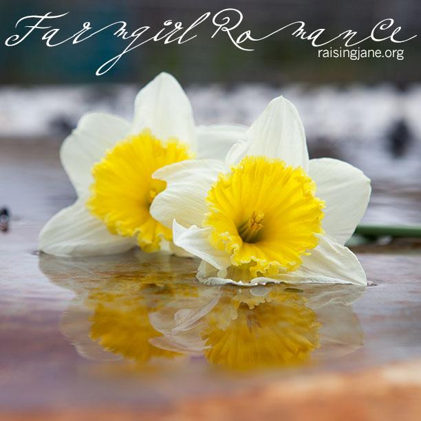 farm-romance_9324