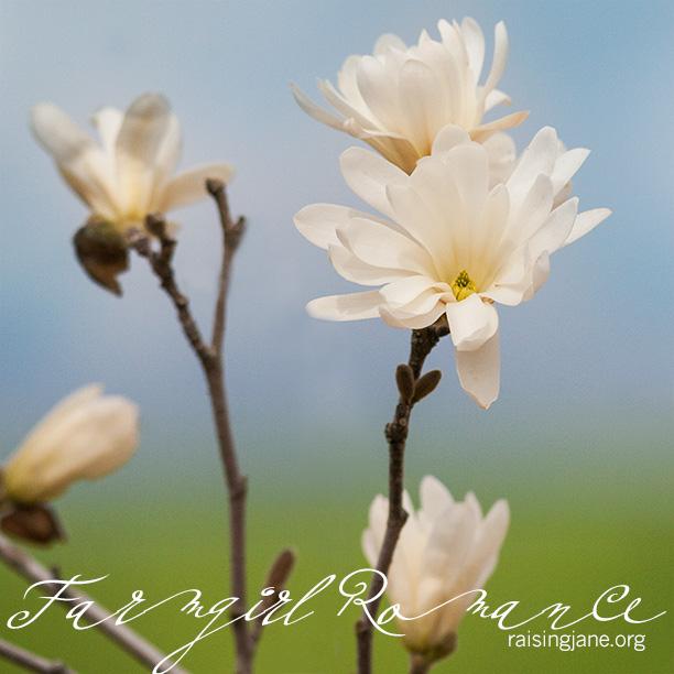 farm-romance_1709