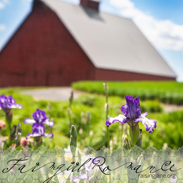farm-romance_5697