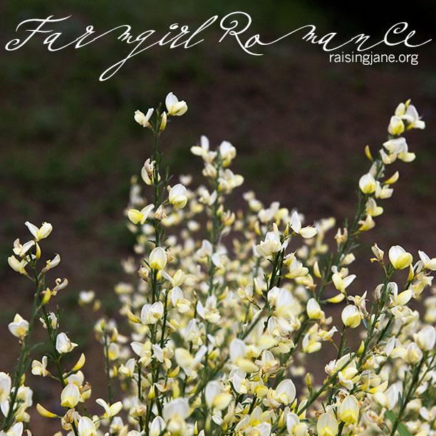 farm-romance_0351