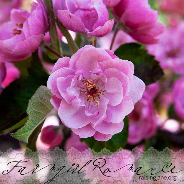 farm-romance_9389