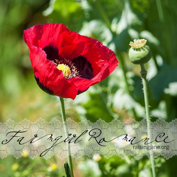 farm-romance_9484