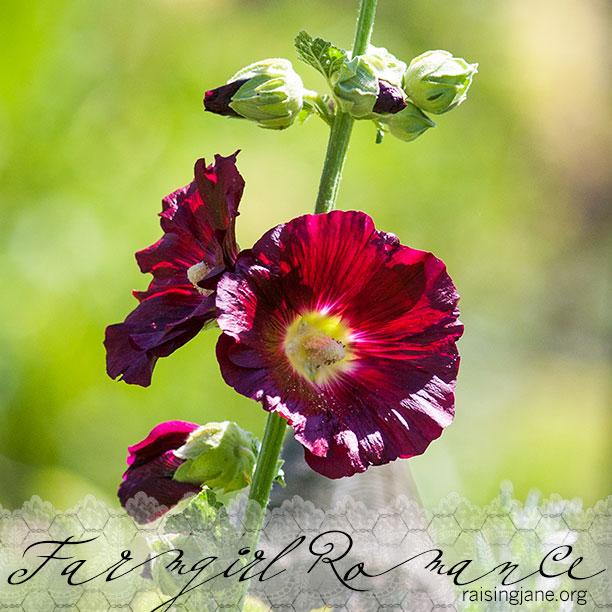 farm-romance_0215