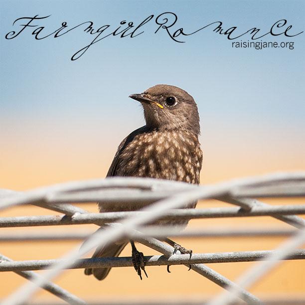 farm-romance_1254