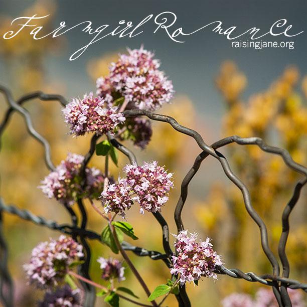 farm-romance_1271