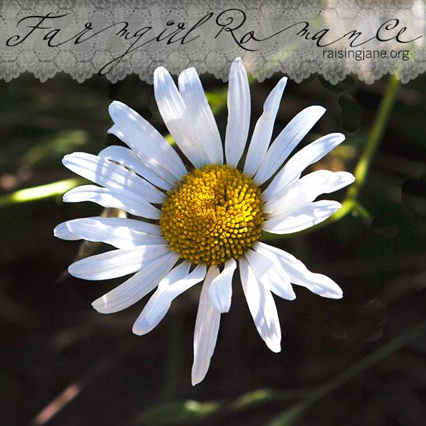 farmgirl-romance_9068
