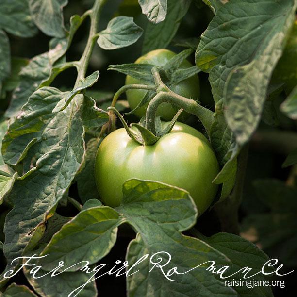 farm-romance_2179