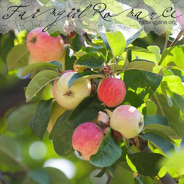farm-romance_3058