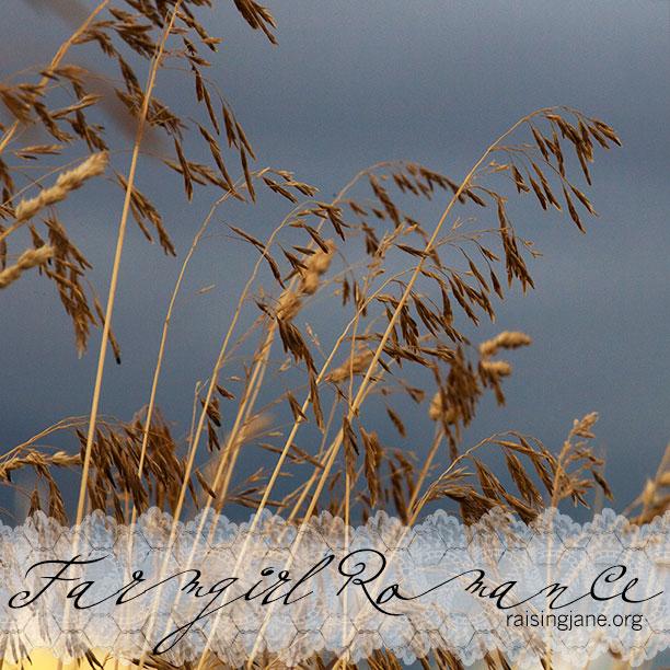 wild-grass-storm_3319