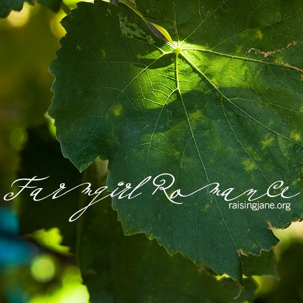 leaf_4063