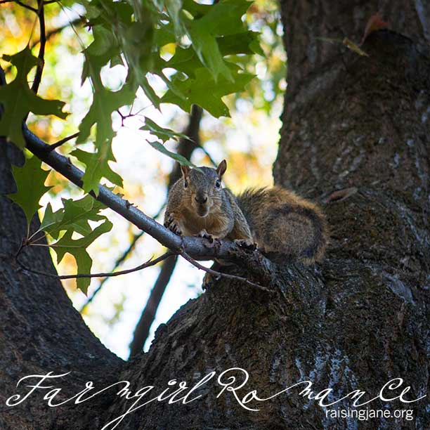 squirrel_6832