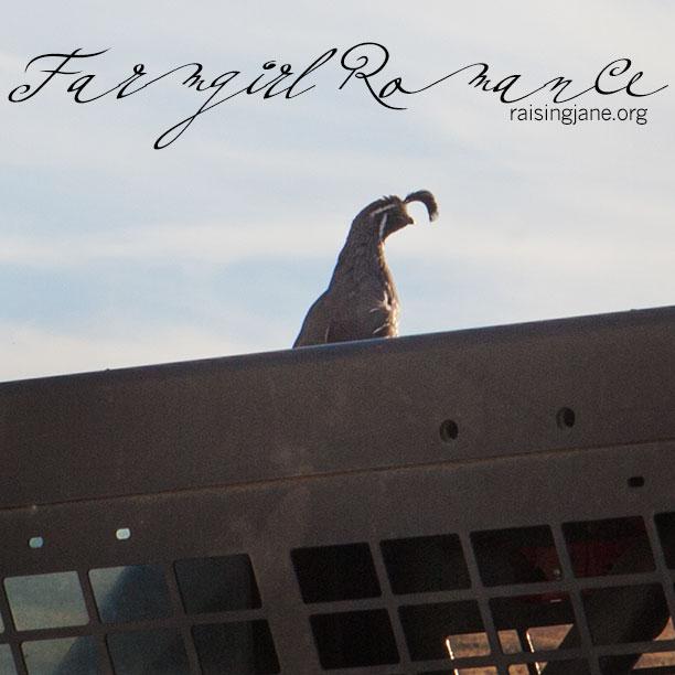 farmgirl-romance_6941