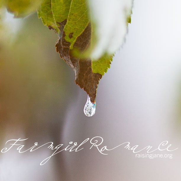 farmgirl-romance_7885