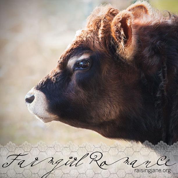 farmgirl-romance_8350