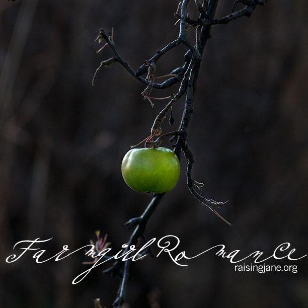 farmgirl-romance_8370