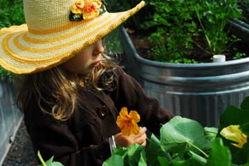 Stella among the nasturtiums in her sun hat, again.